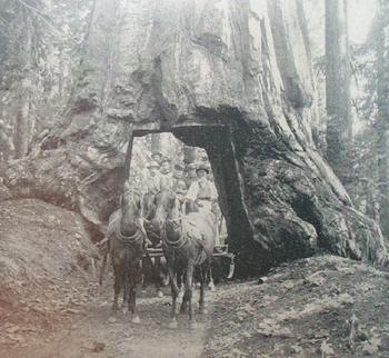 Redwoodwagon